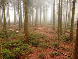 Forstarbeiten Teil1006