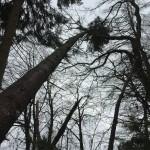 Windbruch April 2015014