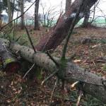 Windbruch April 2015015